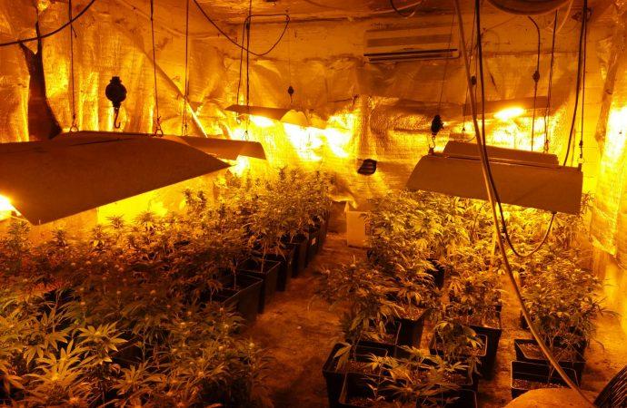 400 plantes…